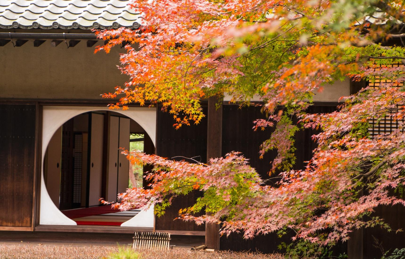 10种红色燃起古都镰仓的秋天